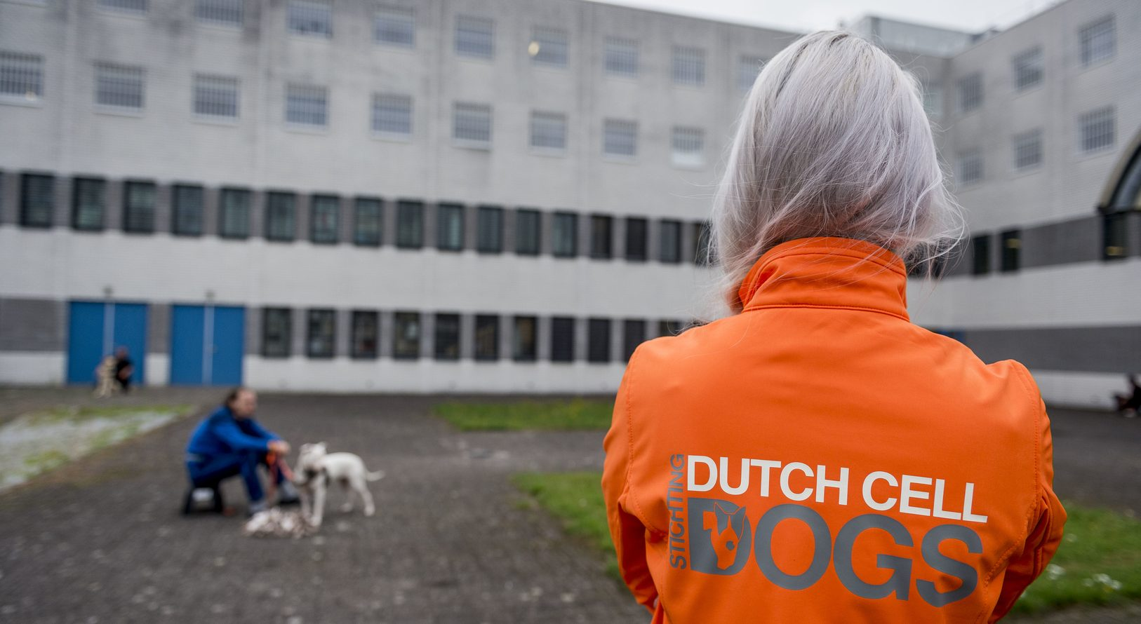 Interim management Dutch Cell Dogs