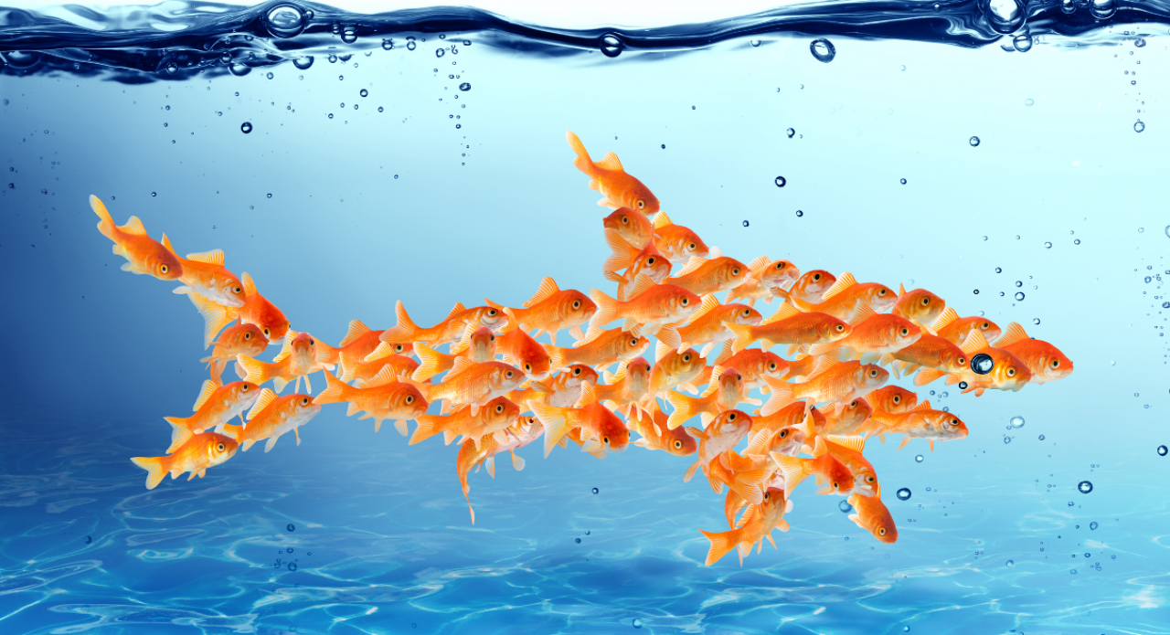 Samenwerken Vissen